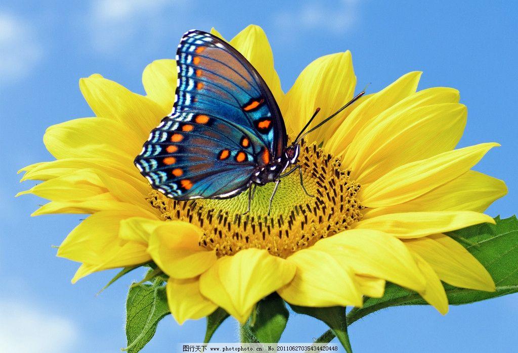 蝴蝶 花朵图片_昆虫_生物世界_图行天下图库