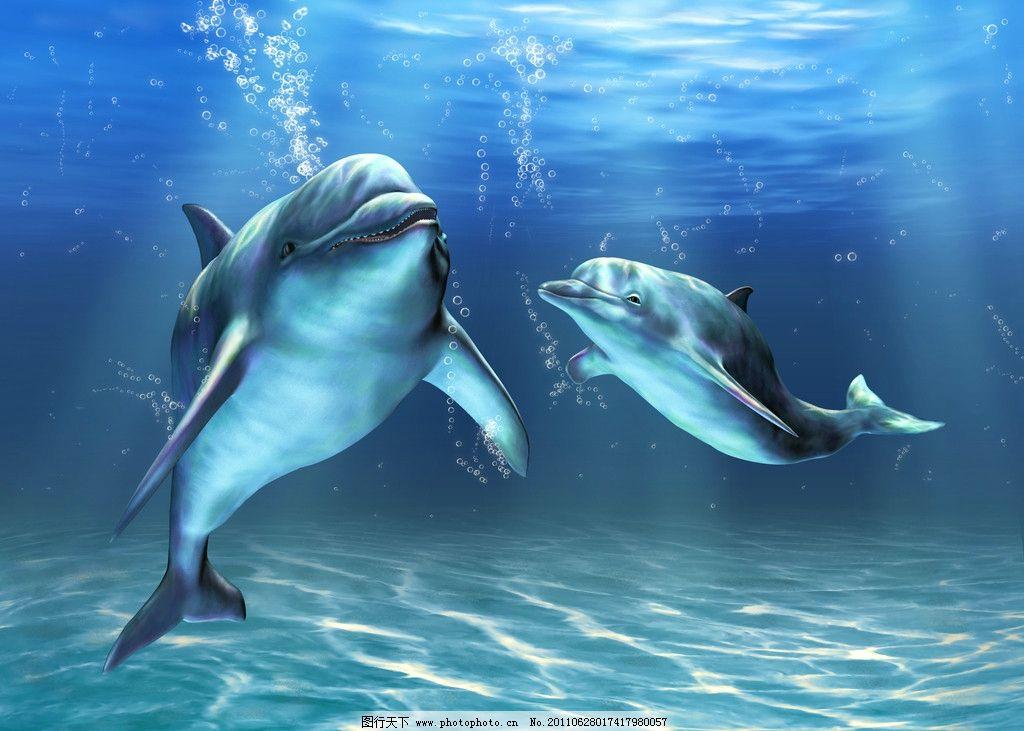 海豚 嬉戏海豚 动物摄影 水中生物 可爱 清澈的水 海洋生物 海豚摄影