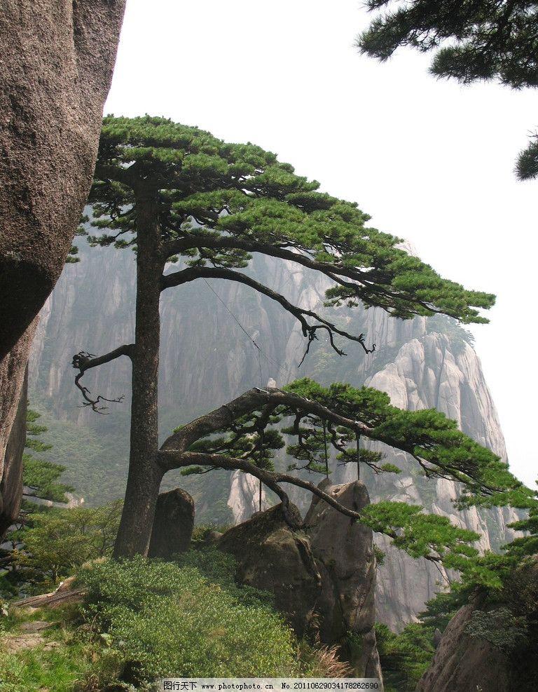 迎客松 黄山 松树 自然风景 旅游摄影 摄影 180dpi jpg