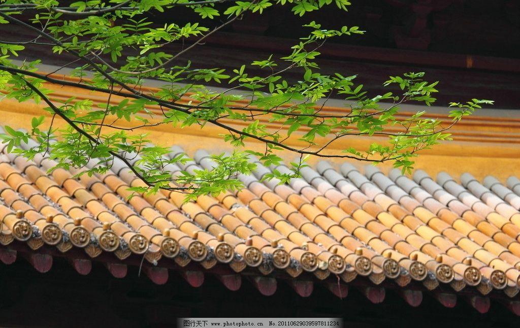 黄瓦绿叶 黄瓦 绿叶 叶子 枝条 枝叶 树叶 琉璃瓦 屋顶 房顶 瓦 建筑图片