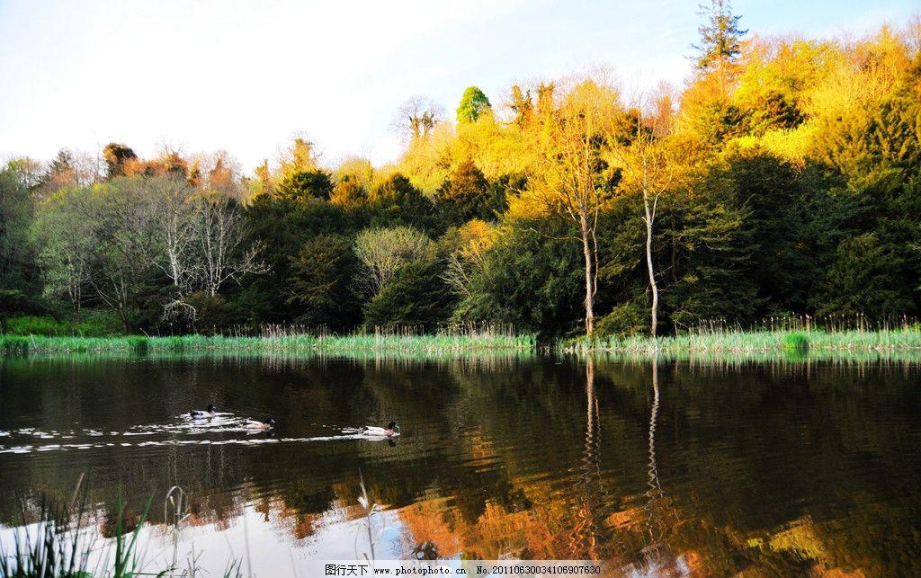 爱尔兰风景 欧洲 西欧国家 湖泊 湖水 倒影 水鸟 树木 草场