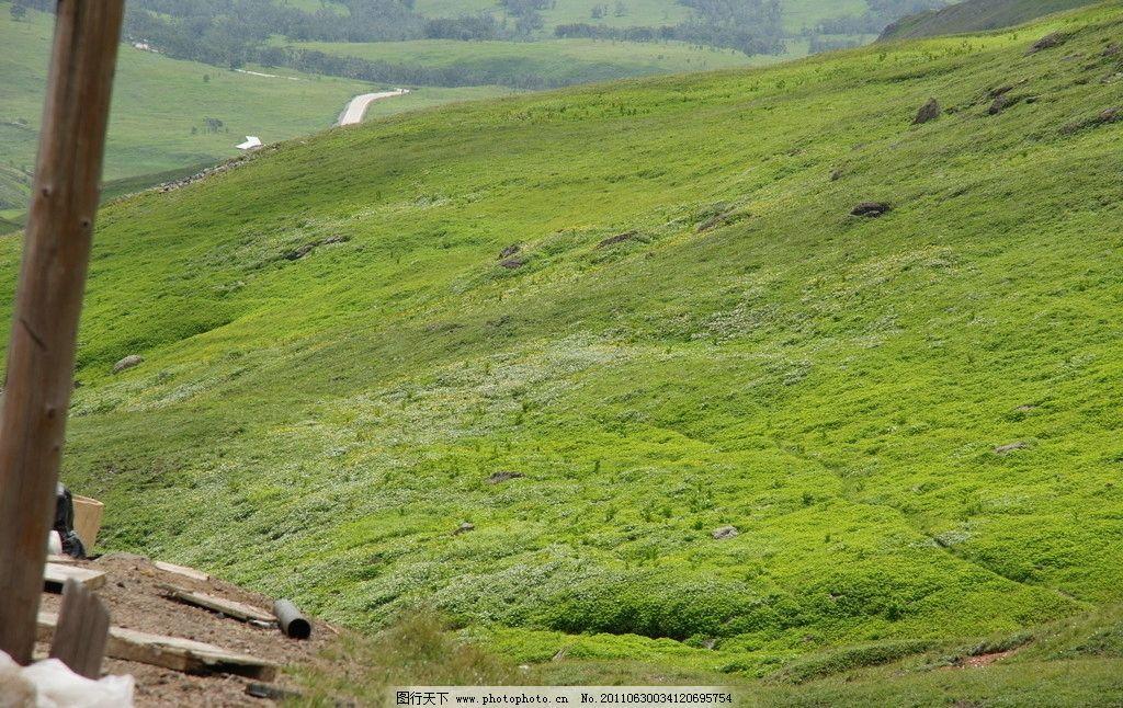 长白山 山坡 草地 绿地 坡地 绿草 春天 自然风景 旅游摄影 摄影 350