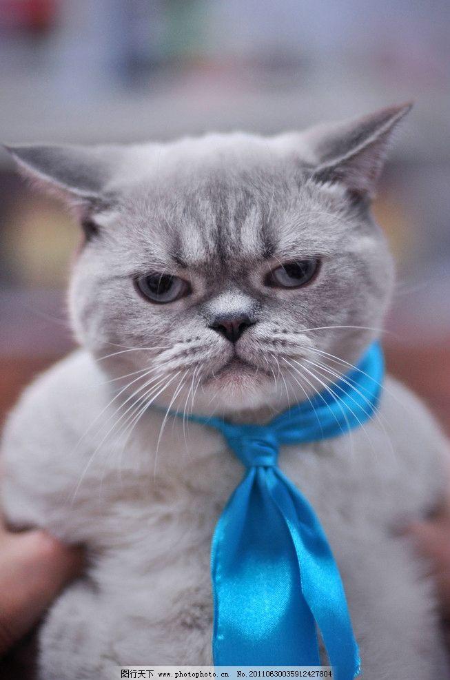 搞笑的猫 眼神 丝巾 摄影 特写